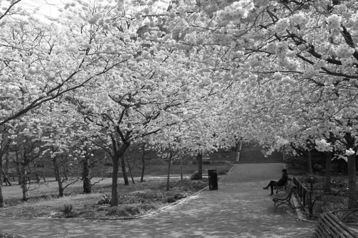 spring season B&W